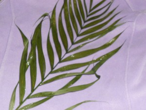 Palm-small.jpg